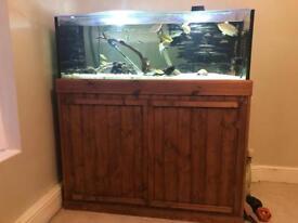 ;4foot aquarium complete set up