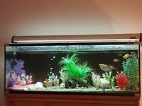 Aqua One 180 litre Fish Tank plus Accessories