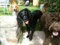 BROUGHTY DOG WALKING & HOME BOARDING friendly, reliable, experienced & fully insured. Small groups.