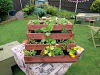 Planter with plants