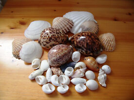 A collection of 33 various sea shells.For display indoors/garden /jewellery/craft etc. £5 ovno lot.