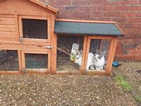 2 rabbits with hutch