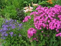 Flowers Perennial Plants