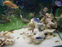 Fish Tank Full Setup for Sale (Aquarium Sale) 420 ONO