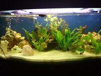 juwel 450 fish tank