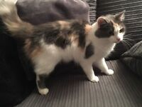 1year old cat kitten for sale very cute