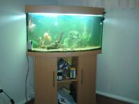 JUWEL AQUARIUM FISH TANK WITH APPROX 14 FISH,FOR ANY VEIWING CALL PAUL,07764443895