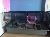 2 male mice with cage