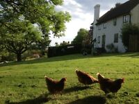 Two bedroom cottage in Sussex available for part-time live-in housekeeper