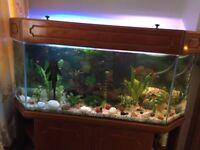 Fish tank - Indoor