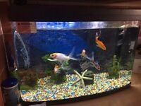 Fish tank including fish and all accessories bargain price