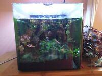 Aquarium with fish, plants, rocks and equipment
