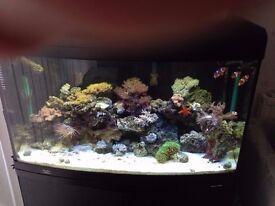 fishtank marine setup