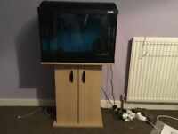 2ft Fluval Fish Tank with cabinet and Fish