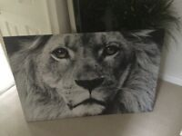 Extra large lion wall canvas