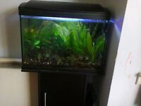 Fishtank and stand