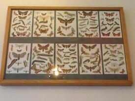 Light Oak Framed Butterfly/Moth Book Prints