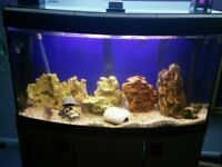 Bow fronted tropical fish tank complete setup