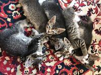 🐯Beautiful Smart Kittens