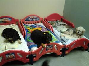 Doggy Daycare and Kennel-Free Boarding Services St. John's Newfoundland image 2