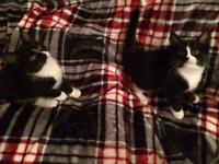 Girl Twin Kittens