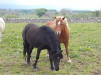 HOLIDAY/ EMERGENCY HORSE FIELD CHECKS AND PET SITTER AND DOG WALKER - PENRITH-PENRUDDOCK AREAS