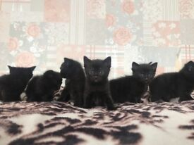 Cute kittens looking for a forever home