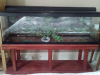 Large 4ft glass fish tank and accessories