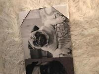 Black and white Pug canvas pictures x 3 BRAND NEW