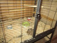 2 degus free to good home