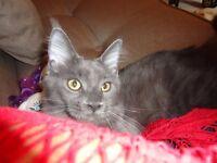 Bev's Happy Tails - Cat sitter & Dog Walker Greenock Gourock Inverkip Wemyss Bay Skelmorlie Largs