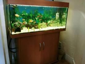 Fish tank Juwel Rio 180 and stand