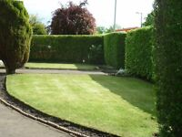 DO IT ALL..garden maintenance. Tidy ups, Fence Erected, All waste removed by us. All post codes
