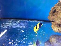 Bio angel fish marine salt water fish tank