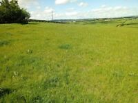 Horse and Pony Livery - Stables to rent close to Bangor, Donaghadee and Newtownards