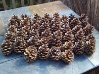 Pine cones - large - great for weddings, crafts, decorations