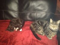 2 Cats Fully Trained Male an Female