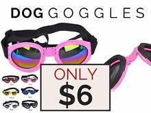 DOG GOGGLES Pimpama Gold Coast North Preview
