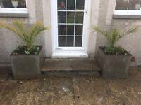 2 HABITAT FIBERGLASS PLANT POTS WITH PLANTS 50CMX50CM