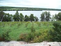 Manitoulin Island Lakefront Vineyard for Sale