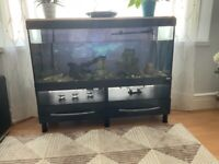 Selling aquarium with fish and pump INCLUDES THE TABLE TO STILL AVAILABLE