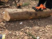 Free logs or wood chipping