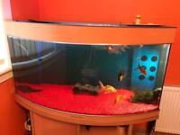 Aqua Medic fish tank with accessories