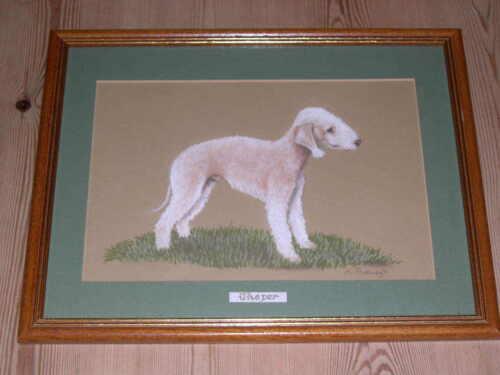 VINTAGE BEDLINGTON TERRIER DOG PAINTING SIGNED FRAMED 1985