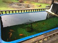 koi pond with uv filter, pump etc