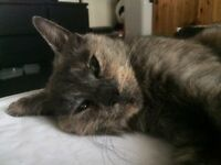 Young tortoiseshell female found, scared and very malnourished