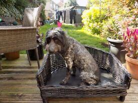 Black wicker dog bed