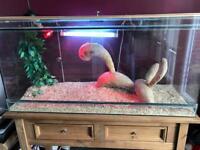 Large glass reptile vivarium