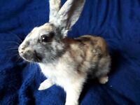 Stunning baby rabbits - extremely sweet natured.