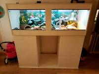 Bearded Dragon with Quality Full Setup & Spares